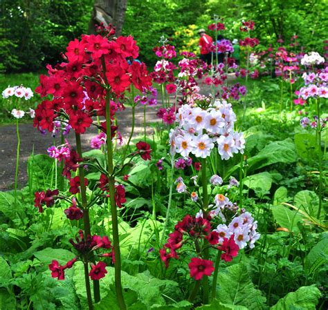 Fairhaven Garden by Fairhaven Garden Primulas Tour Sunday May 17