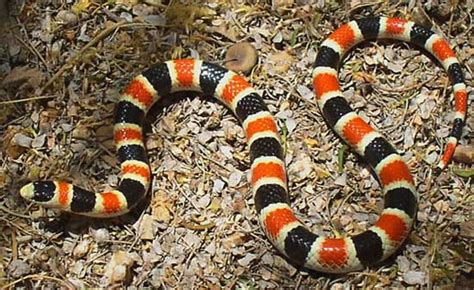 color pattern of poisonous snakes is this snake venomous what to look for when dealing with