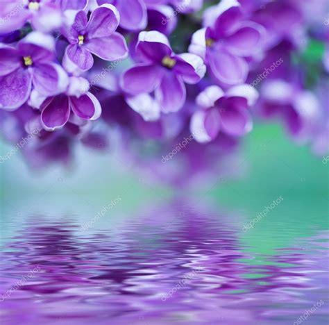 fiori sfondo sfondo fiori lilla foto stock 169 roxana 52660401