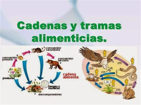cadena alimenticia hongos y bacterias alternativas para cuidar el medio ambiente clasificacion