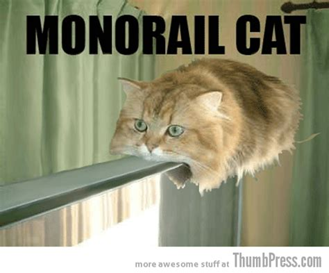 Random Cat Meme - caption cats 25 hilarious cat photos spiced up with even