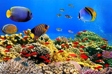 los peces de la 191 sabes c 243 mo ven los peces blog de cl 237 nica baviera