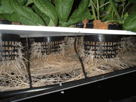 lade hps coltivare indoor con lade per coltivazione indoor orto