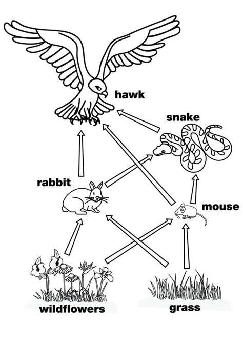 coloring pages of a food chain food chain coloring pages coloring home