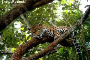 Tropical Rainforest Jaguar Tropical Rainforest Jaguar Car Interior Design