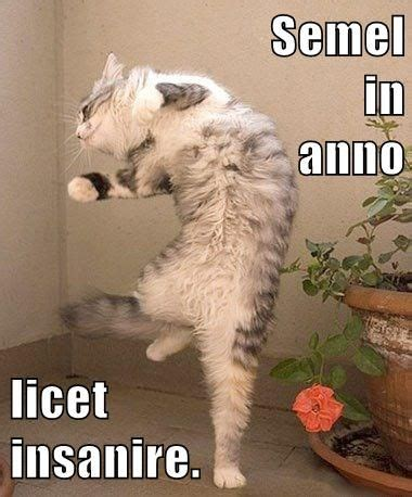500 best latin lolcats images on pinterest latina cats