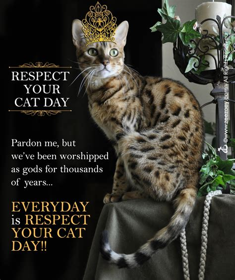 8 Ways Your Cat Shows It You by R E S P E C T The Cat For Respect Your Cat Day Zee