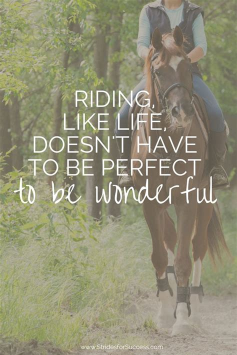 quotes about horses 17 best quotes on quotes
