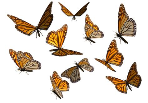 swarm of butterflies clipart 4