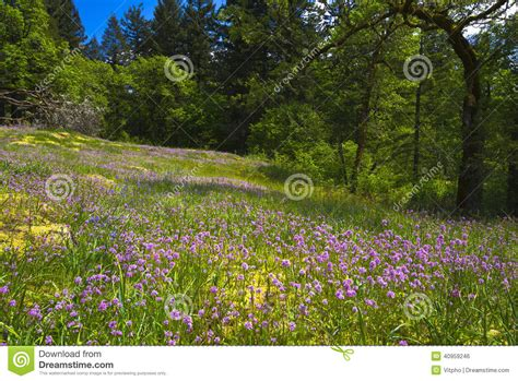 Amazing Forest Glade With Pink And Lilac Wildflowers Stock Photo   Image: 40959246