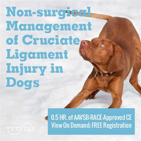 cruciate ligament tear in dogs assisi animal health vetvine webinars