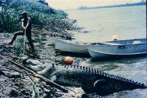 monster crocodile attacks fishing boat monster crocs in animal vs animal forum