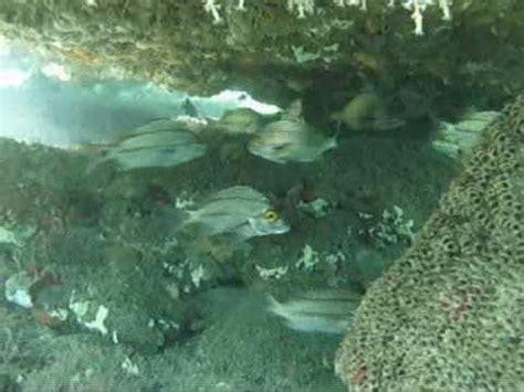 bathtub reef stuart fl bathtub reef stuart youtube