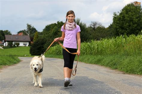 how to a to walk to heel your to walk to heel pets4homes