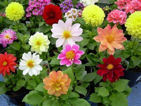 bright colored flowers bright colored flowers by kent lorentzen