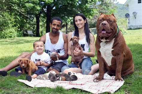 World s largest pitbull hulk has 8 puppies worth up to half a
