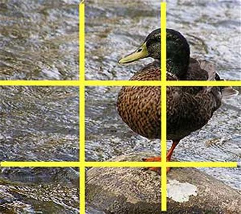 carrer blog o rule golden proportion for calculating the golden rules of photography