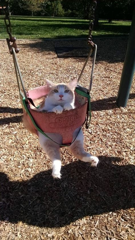 looking for a cousin on a swing 27 pictures that prove cats are also man s best friend
