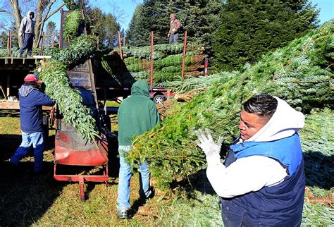 heinerman tree farm wv w va carry on tradition of jefferson co tree farm west virginia