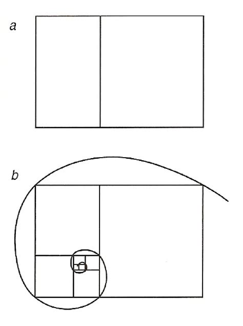 golden section rectangle the golden mean and fibonacci