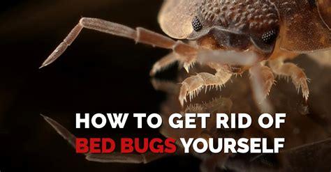 how to get rid of bed how to get rid of bed bugs yourself