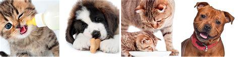 alimentazione animali domestici animali domestici un incontro letterario sull