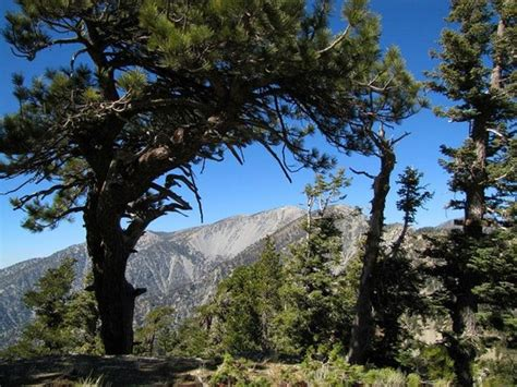 Mount Baldy Cabins by Mt Baldy A K A Mt San Antonio Picture Of Mount