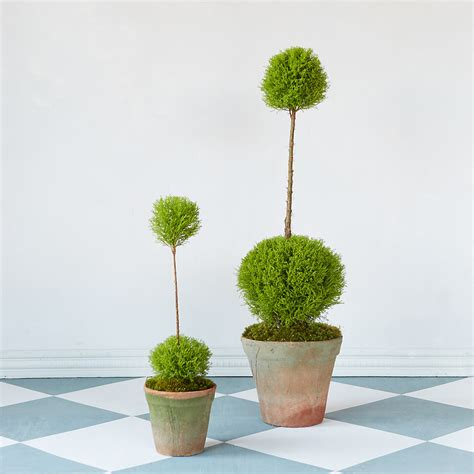 topiary styles topiary style a dash of manicured charm