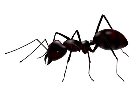 Ant White Background Images | All White Background