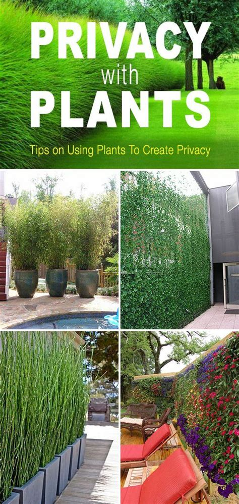 how to create privacy in your backyard 290 best images about beautiful trellis privacy screens