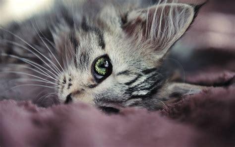 wallpaper cat eyes cat eyes wallpaper by alexandruiuilian on deviantart