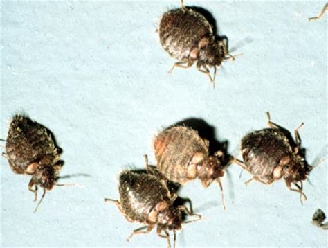 news  bed bugs hits michigan office  cleaning