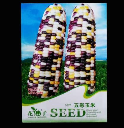 Harga Bibit Jagung Pac 105 benih jagung colourful corn 10 biji retail asia