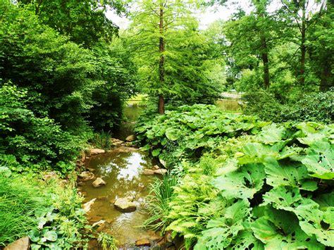 garten kaufen hessen urwald in hessen foto bild landschaft garten
