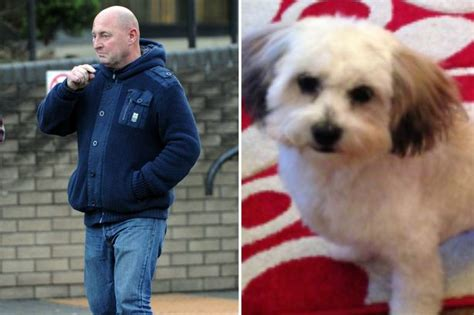shih tzu cross pitbull pit bull like which savaged another in middlesbrough will not be destroyed