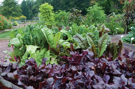 We The Vegetables Commentary On Our Vegetative State Kitchen Garden Vegetables