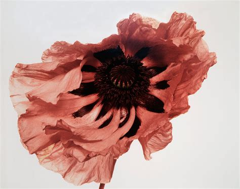 Home And Interiors Magazine flowers by irving penn the gorgeous daily