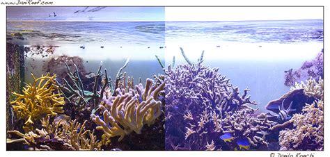 lade per acquario marino lade per acquario marino led blackhairstylecuts