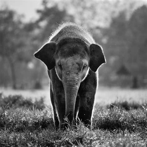 elephant wallpaper pinterest cute elephant wallpaper tumblr photos elephant crazy