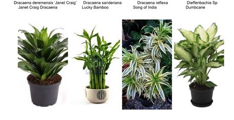 indoor plant images with names interiorscaping compendium indoor plant identification