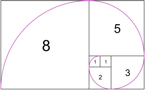number pattern in nature nature by numbers fibonacci sequence animated in stunning