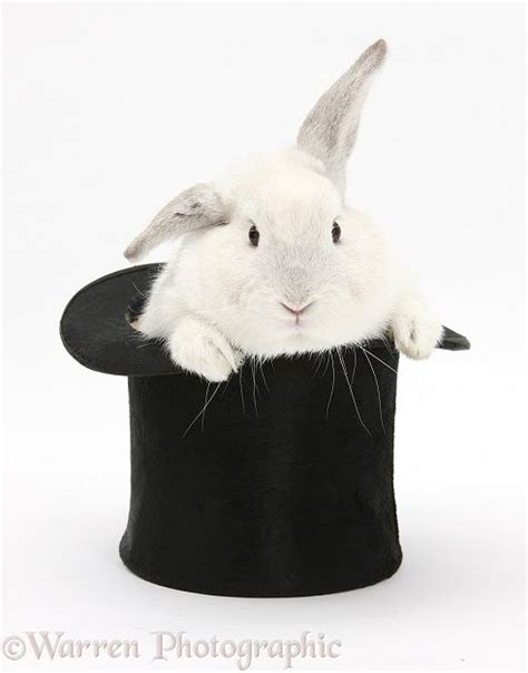 Top Rabbit With Hat 1000 images about b u n n y on