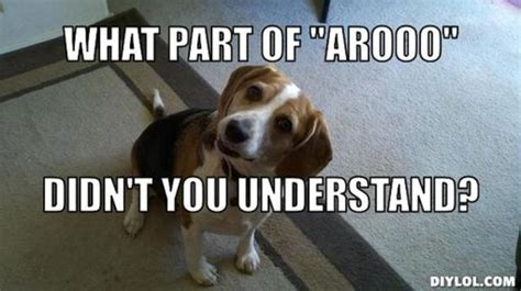 Beagle Meme - beagle meme resized beagle back talk meme generator what