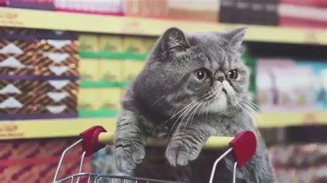Dank Cat Memes - 11 min of dank cat memes youtube