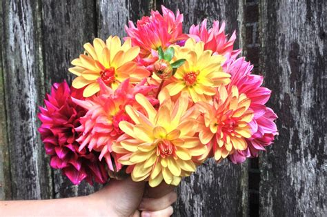 Local Flowers by S Day Giveaway Free Local Flowers All Summer The