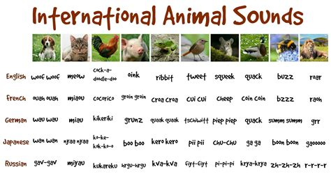 funny international animal sounds  kids fun