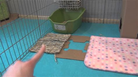How To Set Up A Rabbit Hutch how to set up your rabbits cage