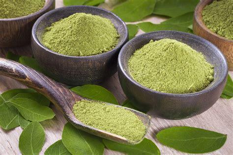 Teh Moringa moringa powder the miracle herb health benefits