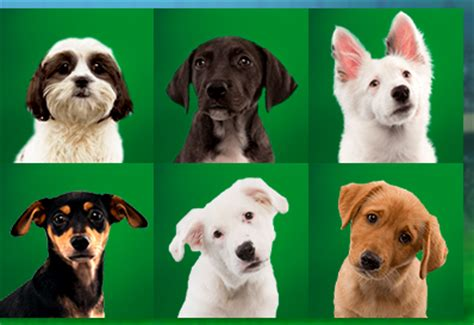 puppy bowl teams puppy bowl xi team ruff vs team fluff phillyvoice