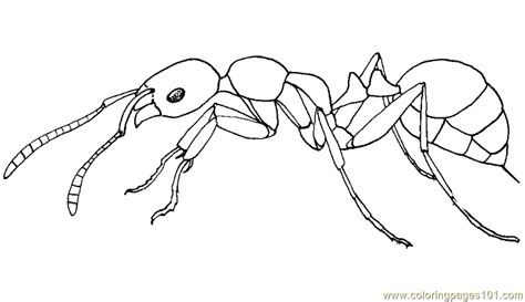 Ants Marching Pages Coloring Pages Ant Coloring Page